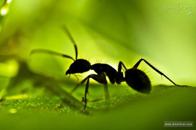 Réquiem por una hormiga