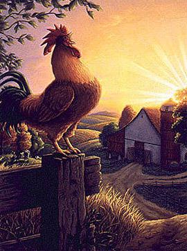 El gallo de la Quinta da Foz