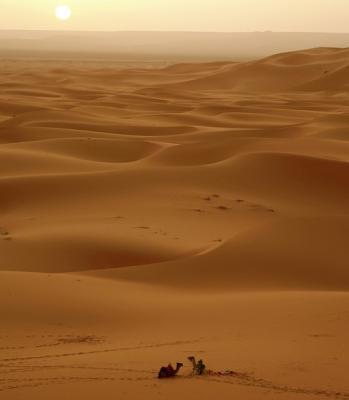 El Genio y el camellero